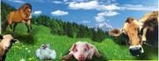 Кормовые добавки  для животноводства