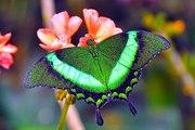 Тропические Живые Бабочки из  Тайланда