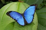 Тропические Живые Бабочки из Амазонки