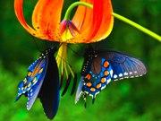 Яркие Живые Бабочки из  Африки